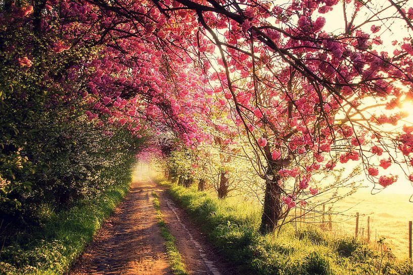 Pink morning van Bart Ceuppens