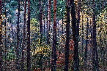 Kleurrijk herfstbos van