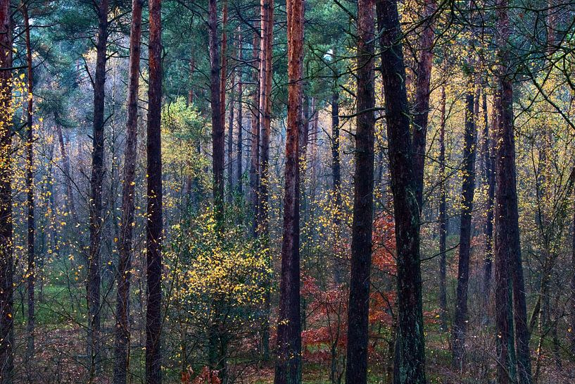 Kleurrijk herfstbos van Mark Scheper