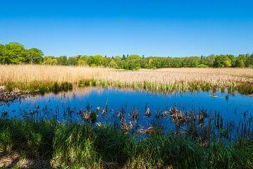 Landschaft mit Teich und Bäumen bei Kuchelmiß von Rico Ködder