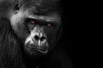 Gorilla von Heiko Lehmann