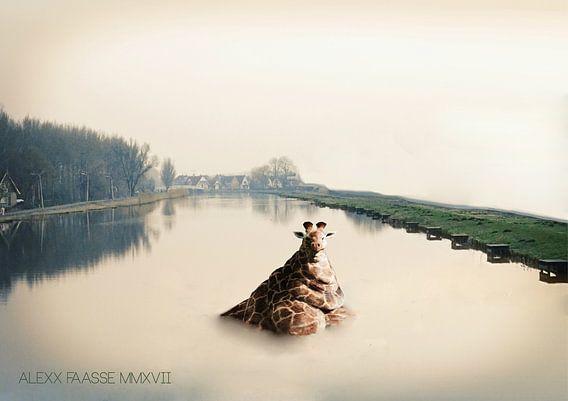 OBESE GIRAFFE CHILLING (ALEXX FAASSE, 2017) van Alex Faasse