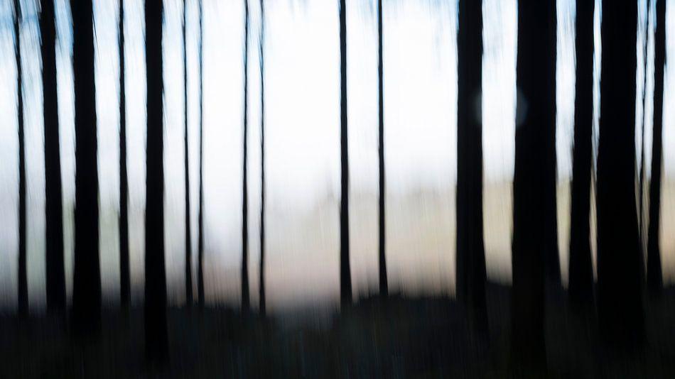 Trees van Cor Ritmeester