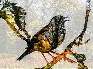 Singdrossel Herbstwald von Ab Wisselink