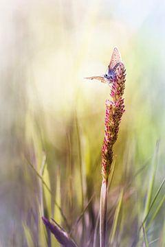 Born with wings van Bob Daalder