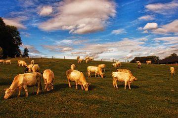 Cows on a hill von Kees Maas
