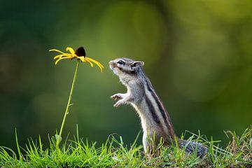 Eekhoorn met gele bloem van Henk Bogaard
