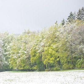 Waldlandschaft in frischen Grüntönen mit einer dünnen Schneeschicht von Desirée Couwenberg
