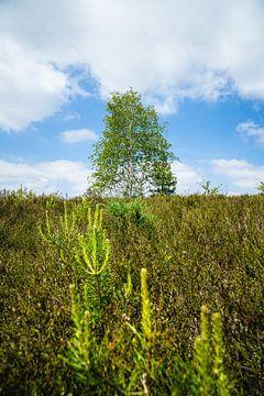 Boom met lage vegetatie van Deborah Zannini