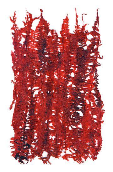Rode plant bladeren