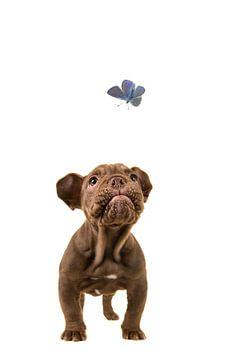 Ich sehe sie fliegen. von Elles Rijsdijk