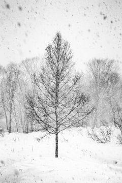 Sneeuwstorm in Japan in zwart wit van