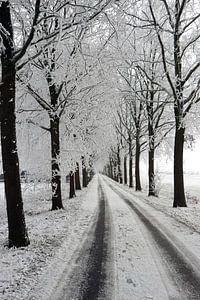 winter laan met bomen landschap