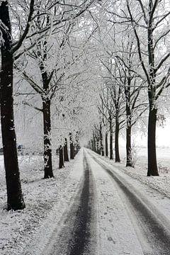 winter laan met bomen landschap van Martin Albers