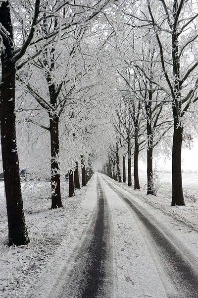 winter laan met bomen landschap van Martin Albers Photography