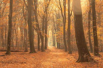 Pad door een mistig bos tijdens een mooie mistige herfstdag van Sjoerd van der Wal