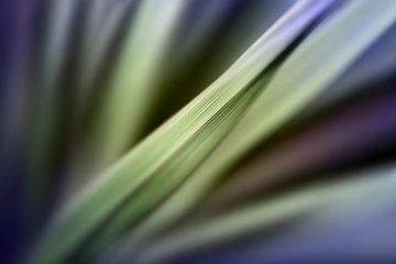 Gräser van Marion Tenbergen