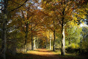 Herfstplaatje in het Roosendaalse natuurgebied Visdonk van Fotografie Jeronimo