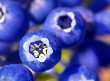 Blaue Traube von Caroline Lichthart