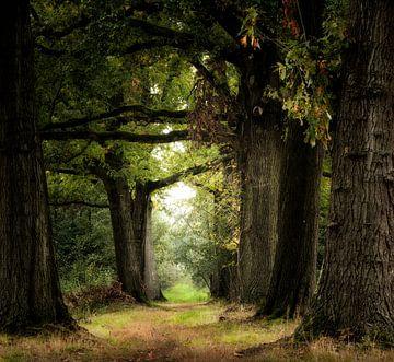 Dreaming Of Summer van Kees van Dongen