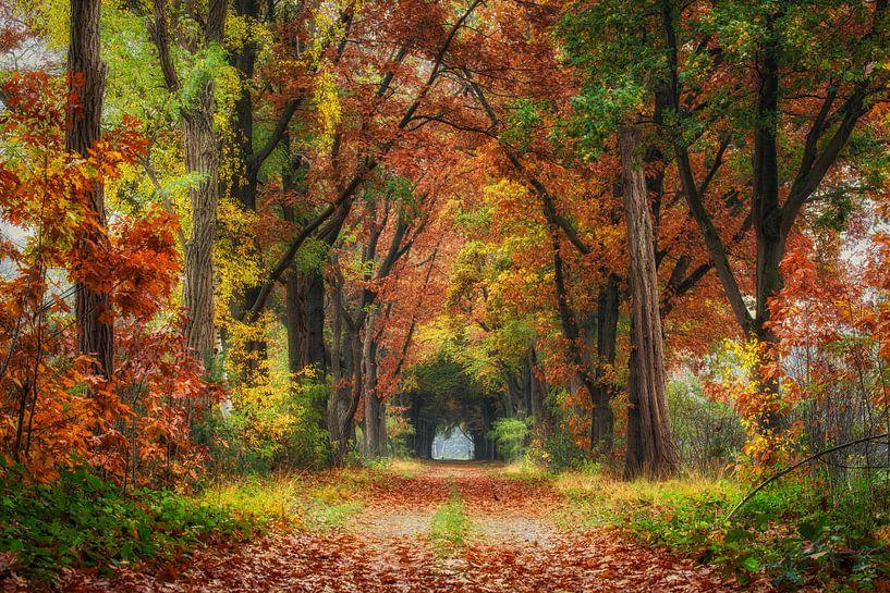 Herfstkleuren van Edwin Mooijaart