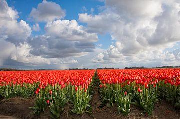 Hollandse tulpenvelden van Wim Kanis
