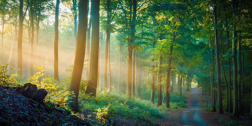 Wald im Licht von Martin Wasilewski
