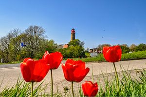 neuer Leuchturm  Kap Arkona, rote Tulpen