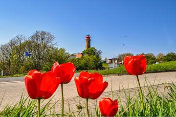 neuer Leuchturm  Kap Arkona, rote Tulpen von GH Foto & Artdesign