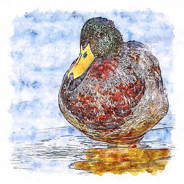 Männliche Ente (Aquarell) von Art by Jeronimo