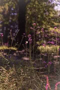 Wilde tuin border met Verbena van Mayra Pama-Luiten