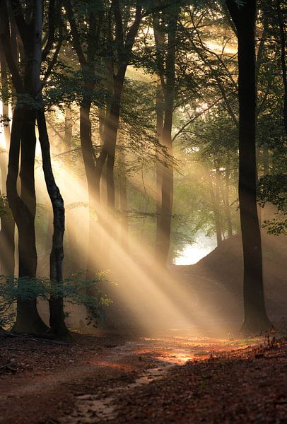 Frühling im Wald von Paul Begijn