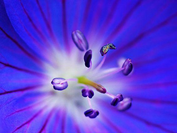 Spacy blue flower van Jessica Berendsen