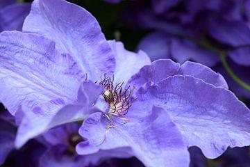 Violette Blume mit violettem Hintergrund von Nicolette Vermeulen