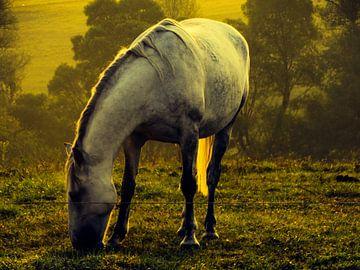 Het paard van Marinescu Dan