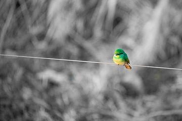 Kleiner grüner Vogel von Jeroen de Weerd