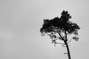 Nature von Nicky Westerburger