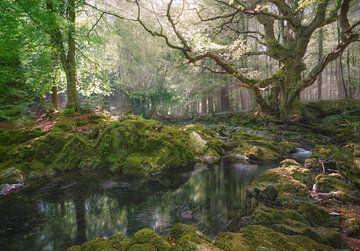 Magischer Tollymore Wald von Roelof Nijholt