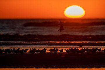 Gruppe von Flussseeschwalben (Sterna hirundo) am Strand sitzend von Beschermingswerk voor aan uw muur