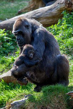 Gorilla's, moeder met jong (baby) van Joost Adriaanse