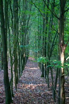 bos van Johan Mulder