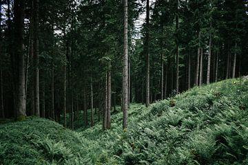 boslandschap Oostenrijk van Jisca Lucia