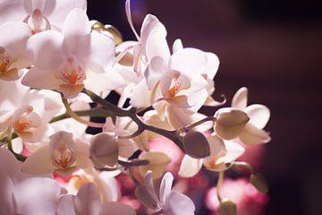 Kleine witte orchidee von Mike Attinger