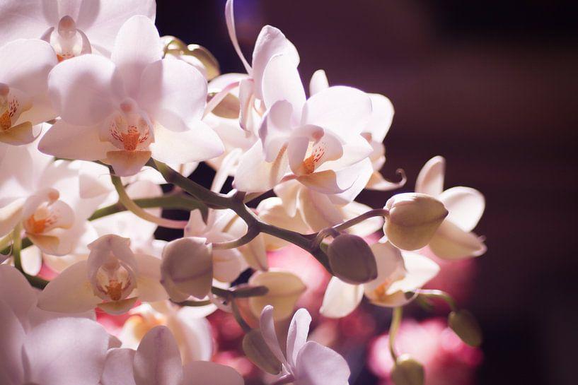 Kleine witte orchidee van Mike Attinger