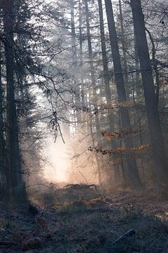 Bevroren bos op de Veluwe van
