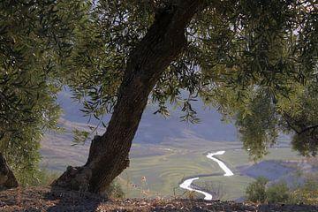 Blick auf den Fluss. von Jan Katuin