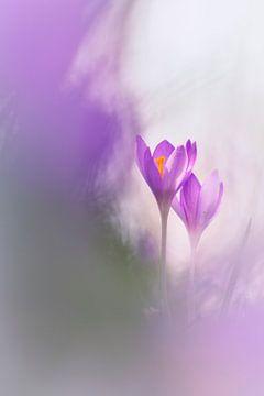 Sehnsucht nach Frühling von Bob Daalder