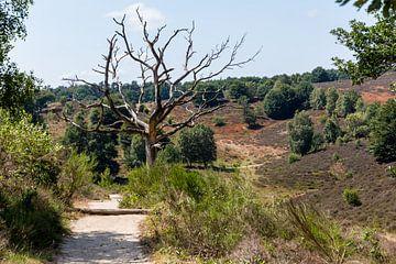 Veluwe landschap (1) von Mayra Pama-Luiten