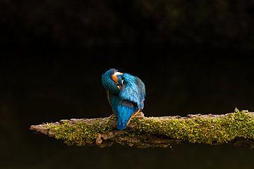 IJsvogel van Marianne Jonkman