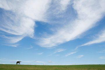 Paard en windveren. van Rens Kromhout